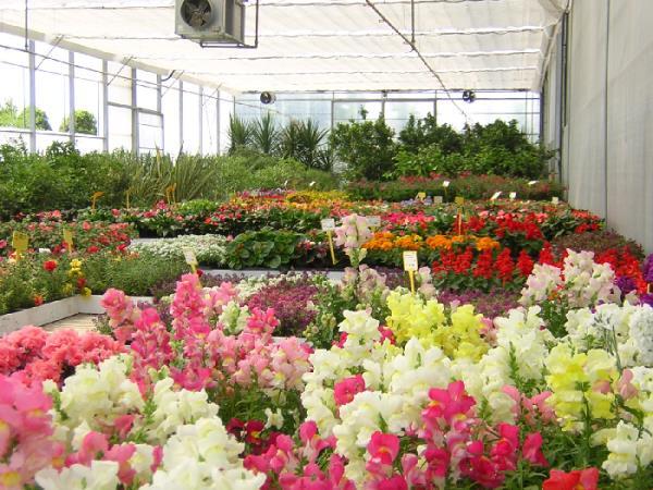 piante e fiori per ogni occasione brescia