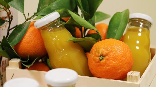 bergamotto calabria agrumi arancia mandarino