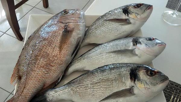 Pesce fresco - Ristorante Liolà  Bagheria