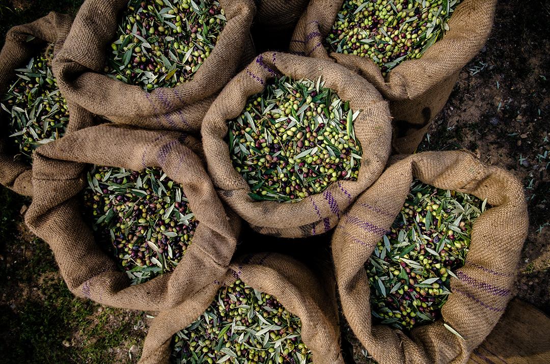 Olive in sacchi