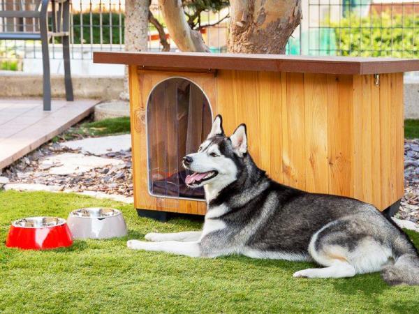 Vendita cucce cani