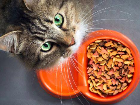 Vendita cibo per gatti