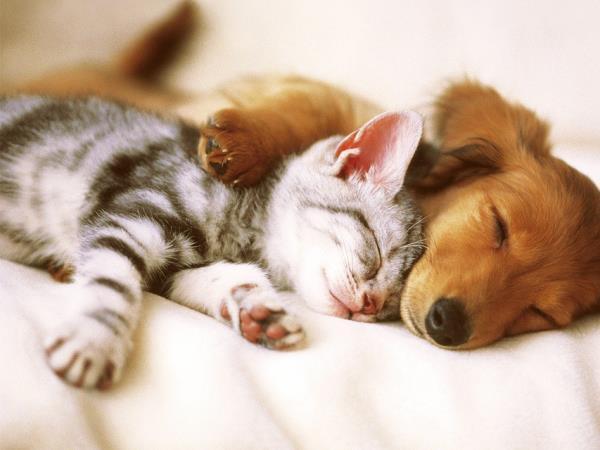 Vendita cuscini per cani