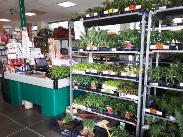 Vendita piante da giardino