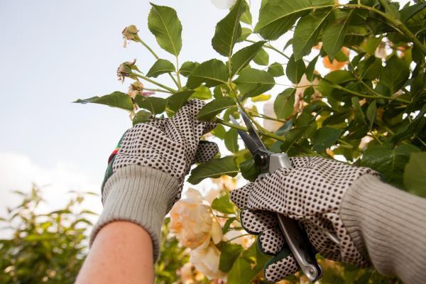 Potatura alberi e cura del verde domestico