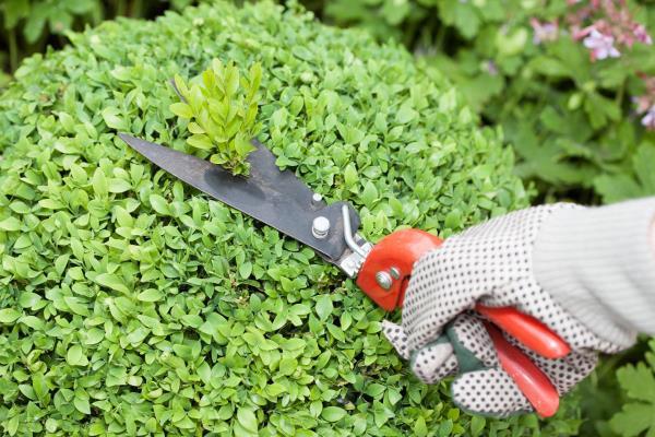 Manutenzione giardino e potatura siepi