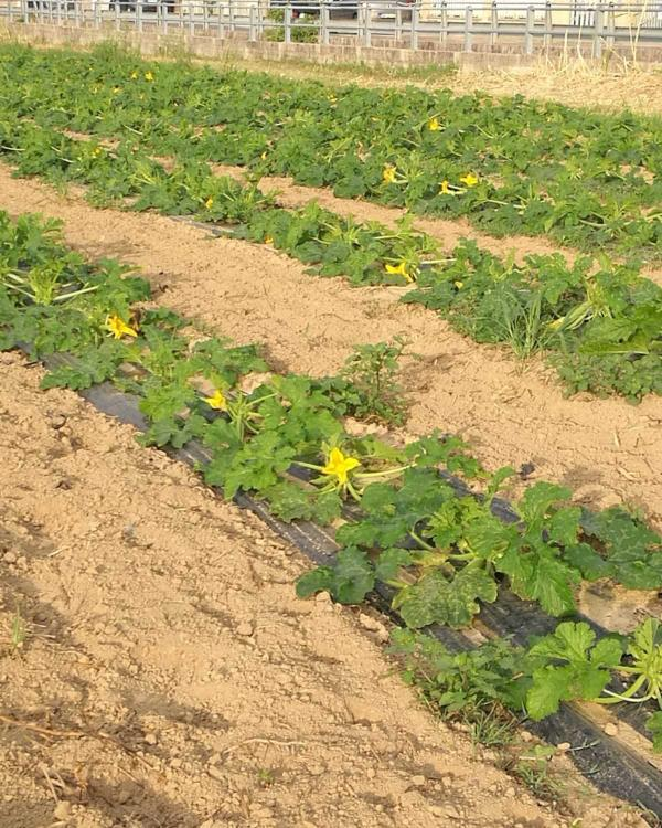 Coltivazione verdura