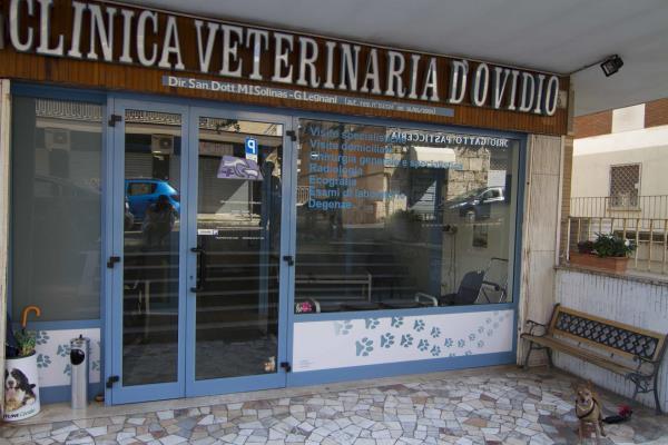 Clinica Veterinaria D Ovidio Visite specialistiche per animali