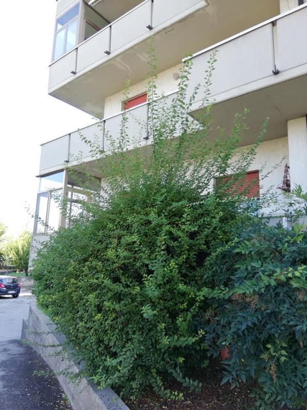 Impresa di Pulizie Adriatica sanificazione ambientale e giardinaggio