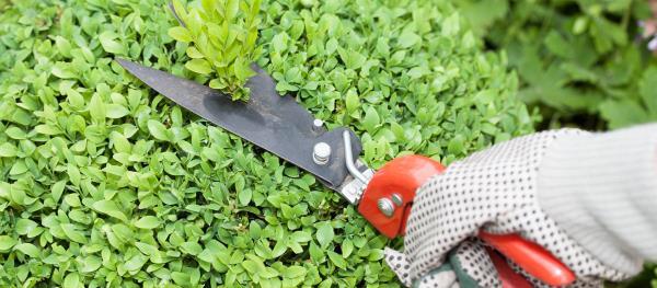 Attrezzi per la cura di siepi, alberi  e piante
