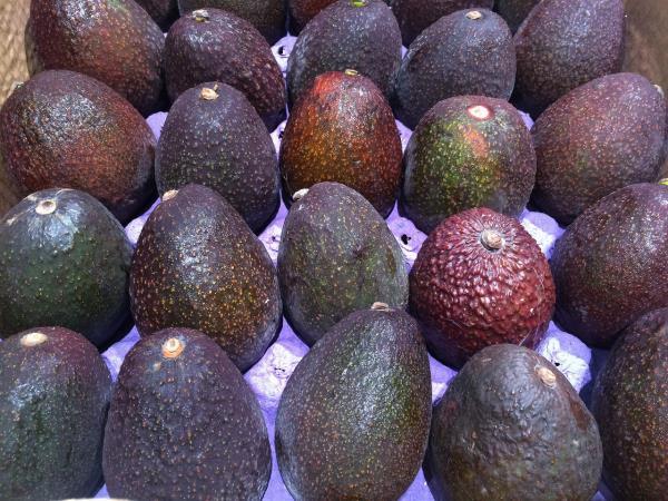 avocado biologico