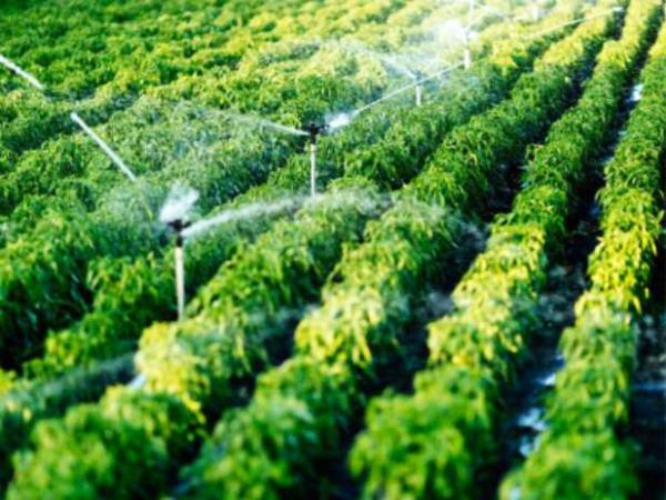 Vendita impianti per irrigazione giardini
