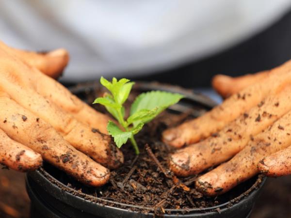 Vendita sementi e terricciati