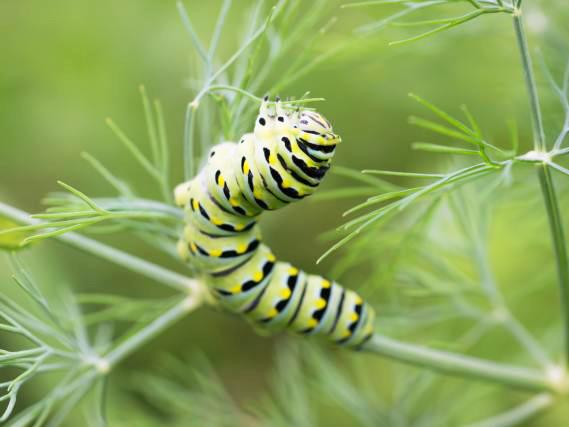 Vendita insetticidi