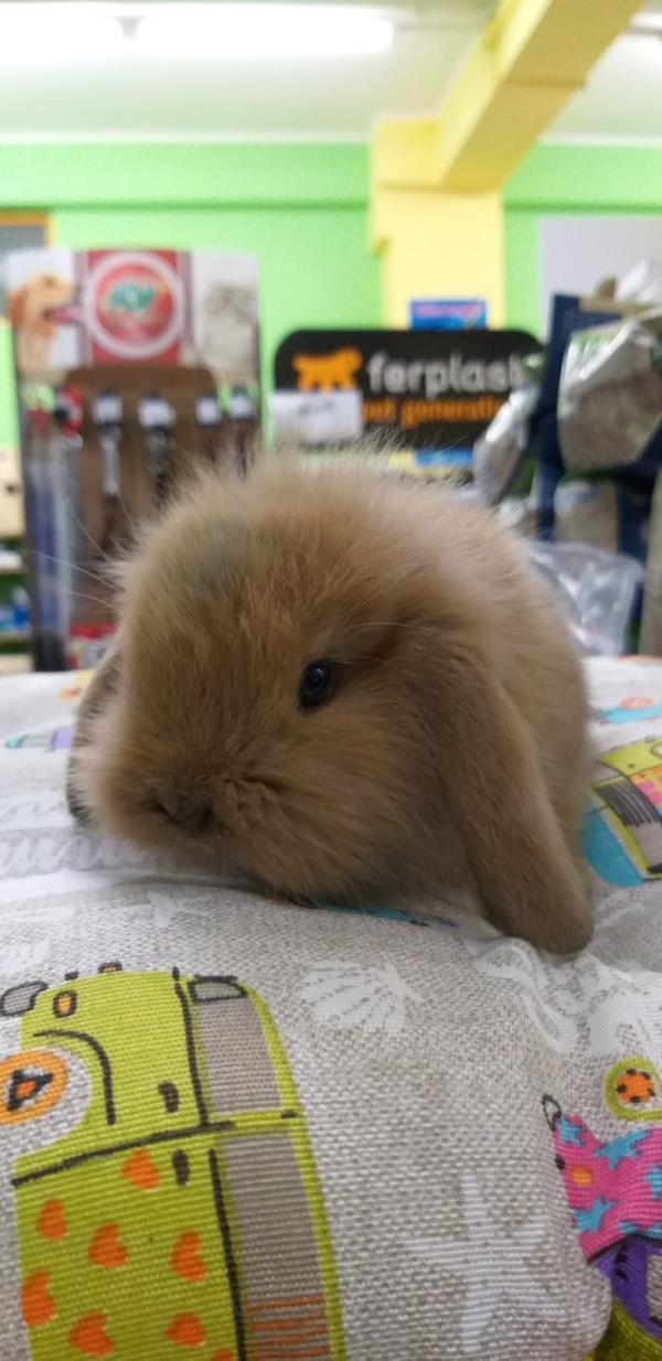 vendita coniglietti pet shop Leo Animali Polistena Reggio Calabria