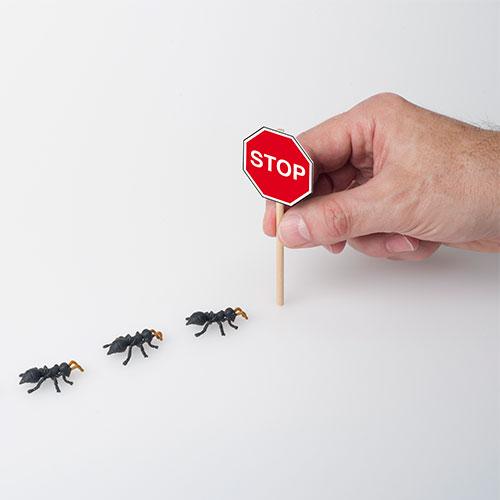 disinfestazione  formiche  a roma