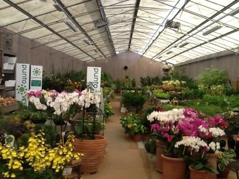 vendita piante e fiori Castel Gandolfo