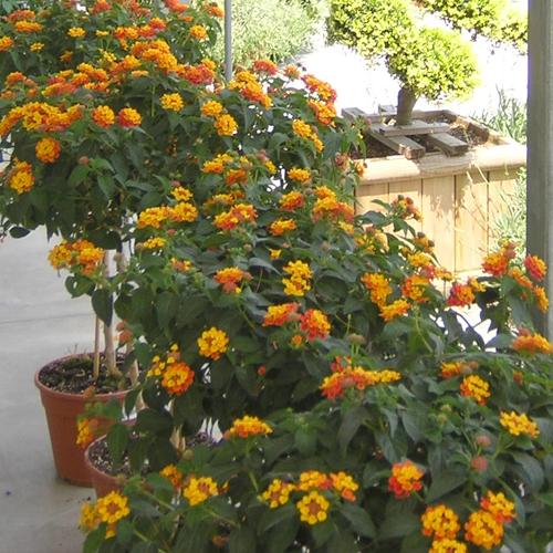 vivaio e garden brescia