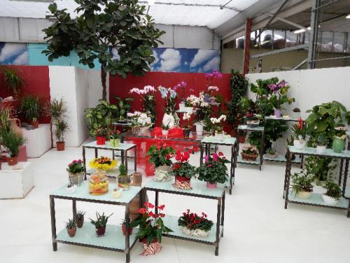 vendita piante annuali e stagionali vivaio brescia