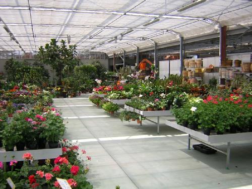 vendita piante da interno brescia