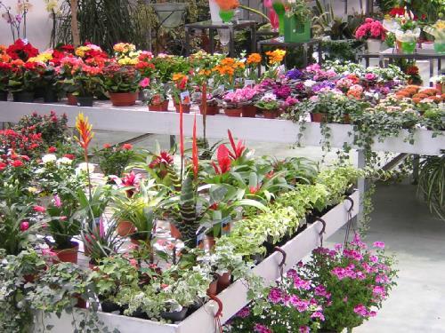 piante da regalo vivaio brescia