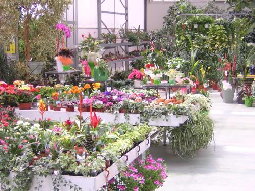 vendita piante da interno vivaio brescia