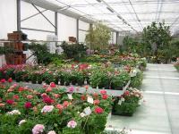 piante per ogni stagione