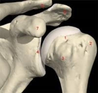 chirurgia capsulite spalla Firenze