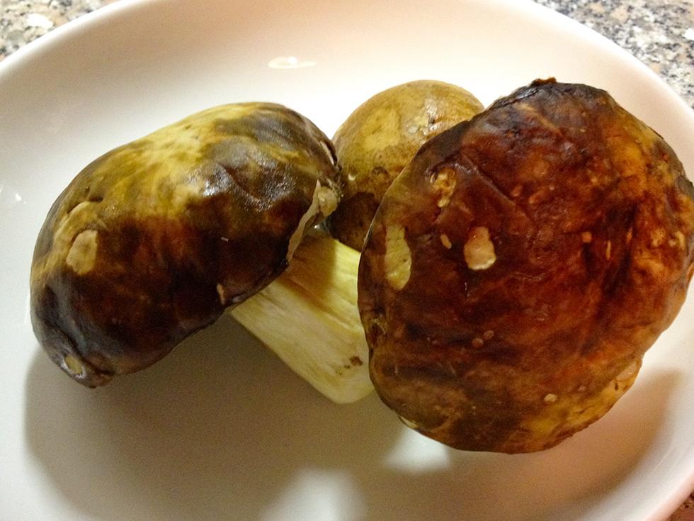 specialità funghi porcini ristorante le sorelle roma centro storico