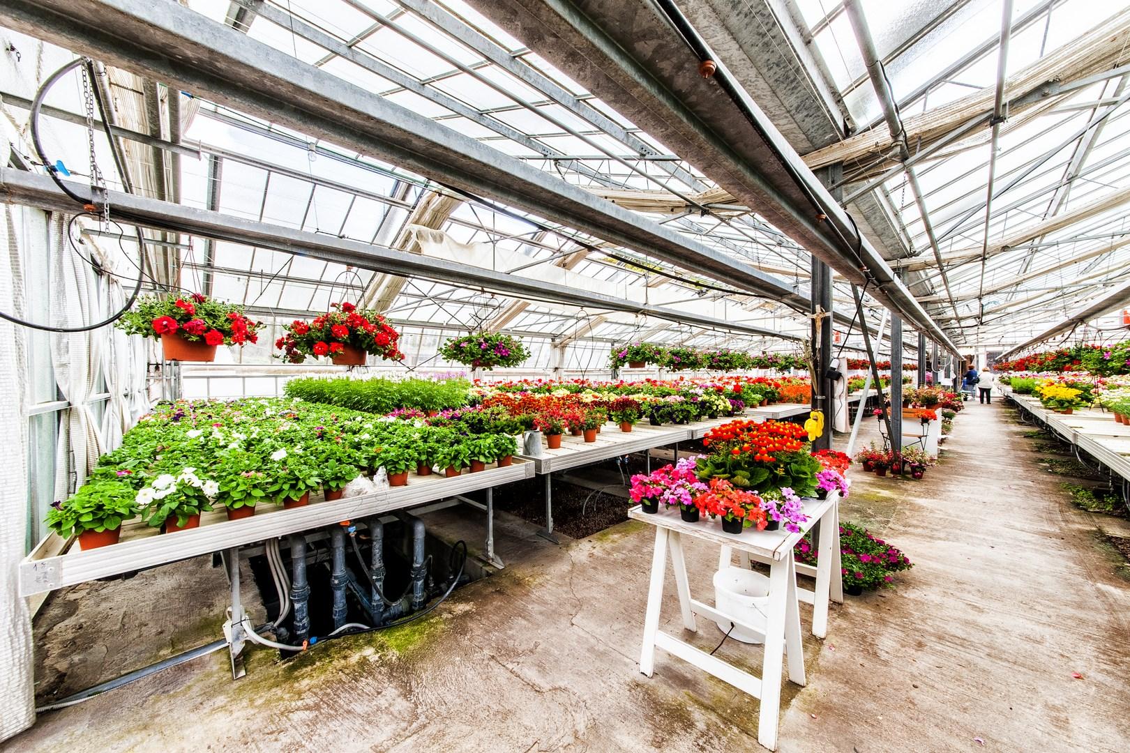 Azienda Floricoltura
