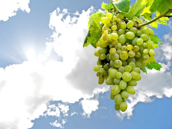 vendita vini locali Trieste
