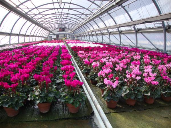 Vivaio di piante e fiori Bobbio Piacenza