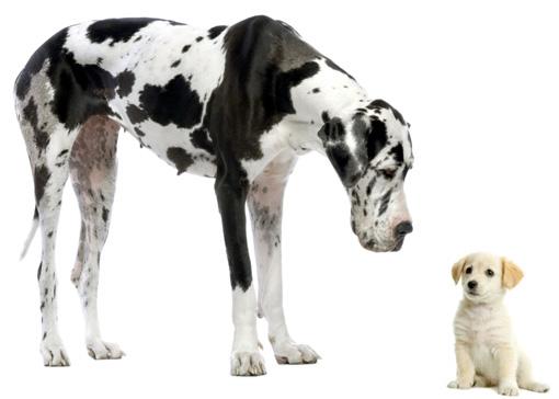 anagrafica per cani