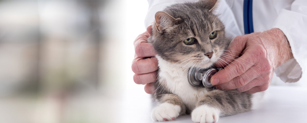 clinica chirurgica veterinaria