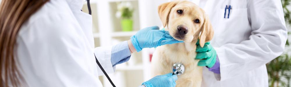 vaccini per il tuo cane o gatto a bagheria