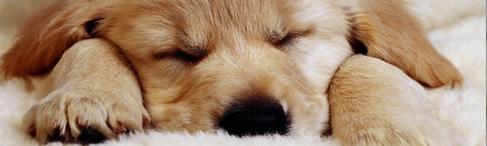 iscrizione anagrafe canina bagheria