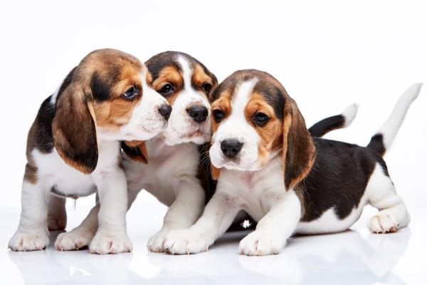 vendita animali domestici Ragusa