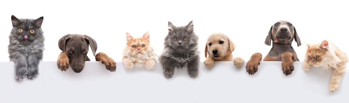 accessori gatto terni