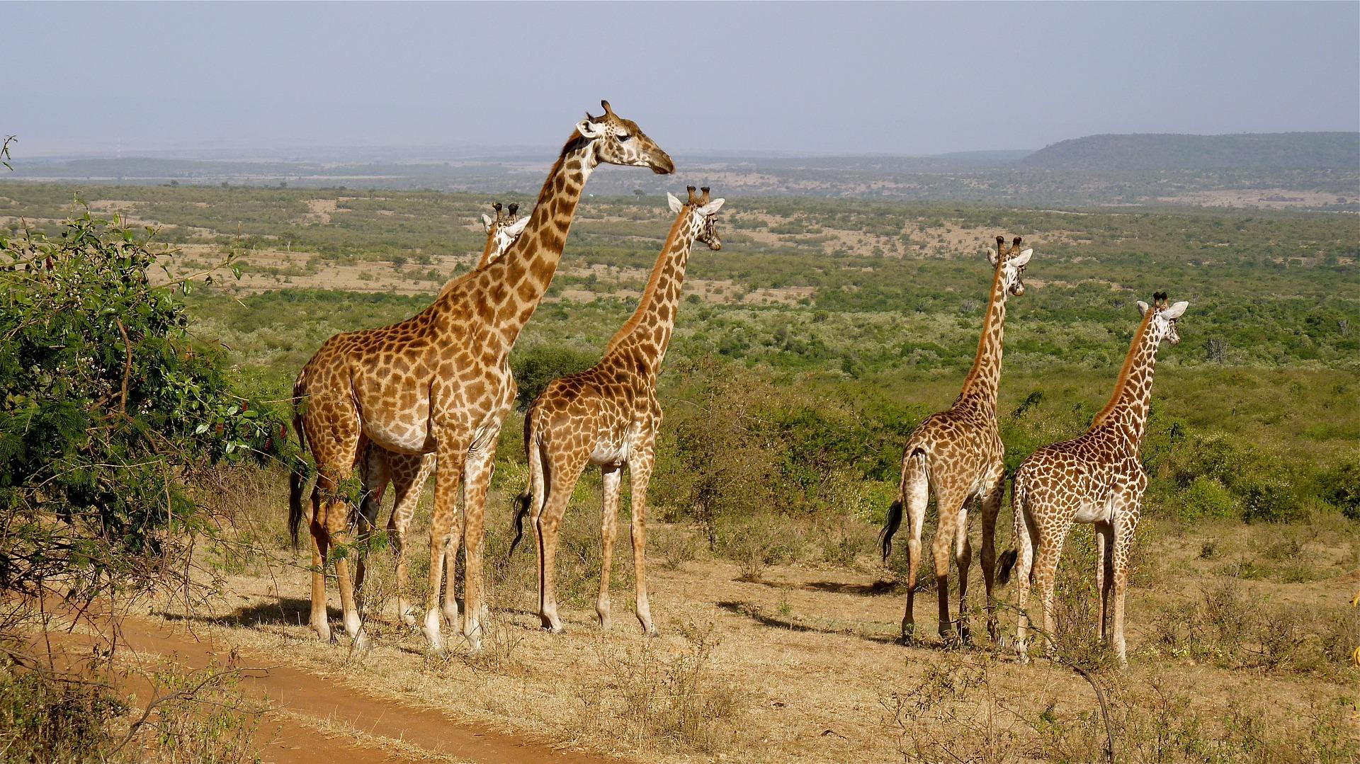 Swami Viaggi Monfalcone - Safari Kenya