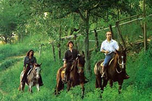 randonnées à cheval valle intelvi
