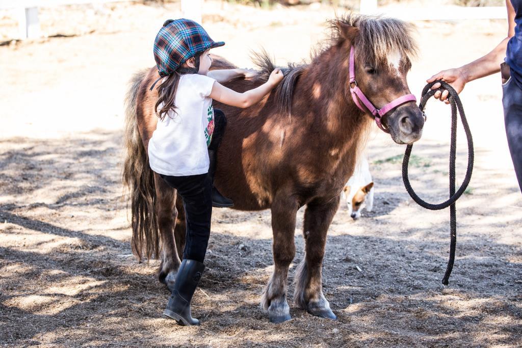 lezioni di equitazione olbia
