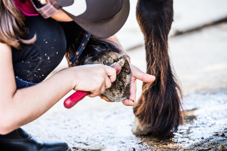 scuola di equitazione olbia