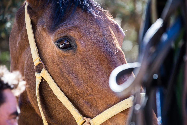 addestramento cavalli olbia