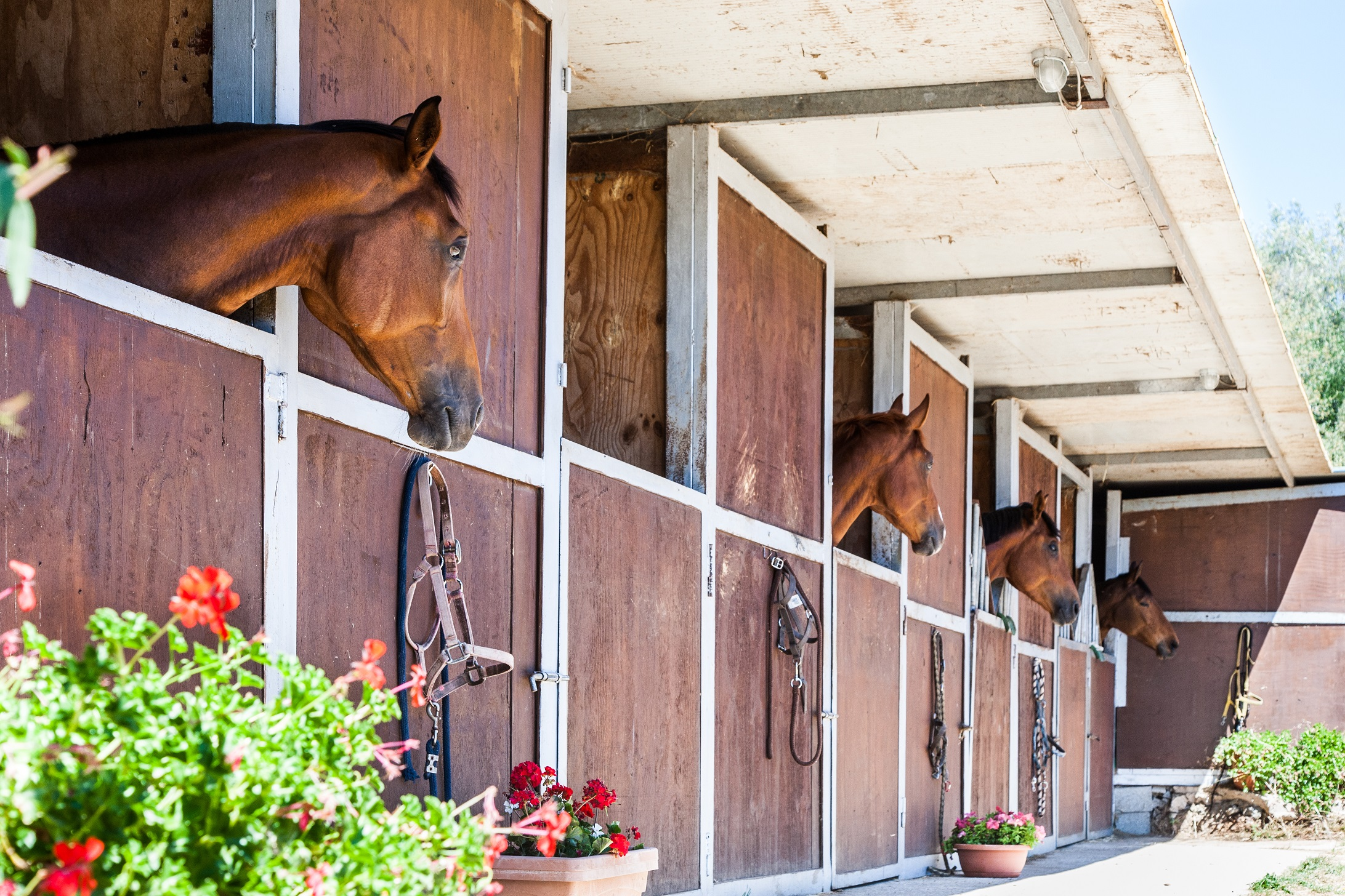 Horses Sardinia Olbia