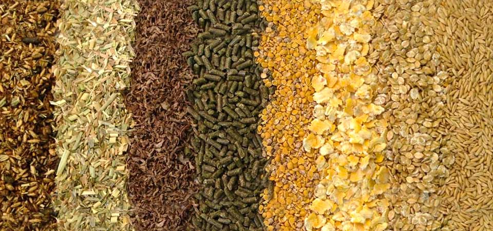 mangimi per animali fattoria ragusa