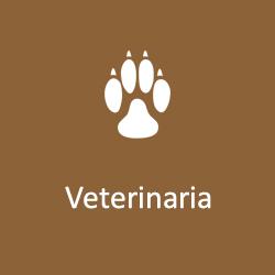 veterinaria farmacia eredi vincenti ostia