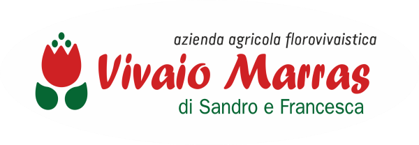 www.vivaiomarras.com