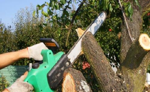 addetto lavori in quota su alberi a Viterbo