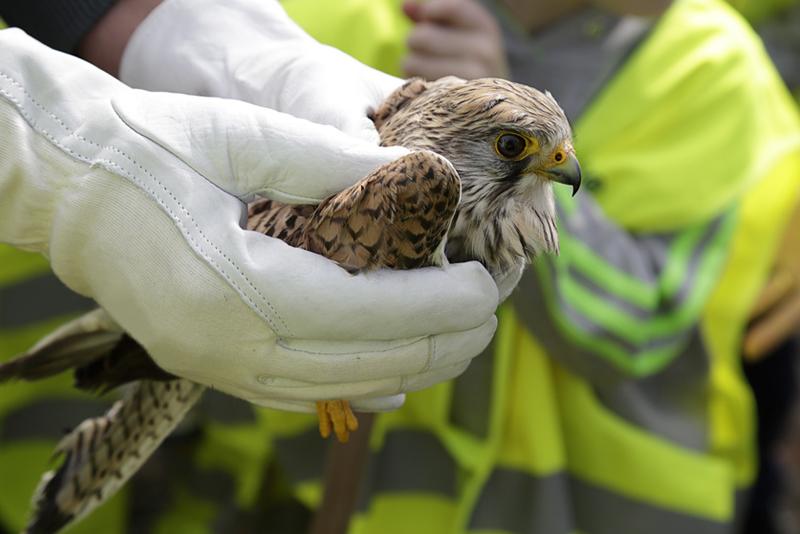 dai roditori agli uccelli roma piazza bologna