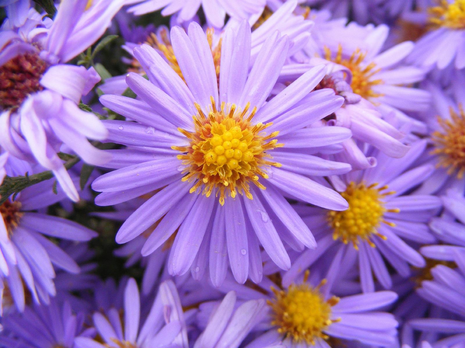 fiori freschi tutti i giorni - fiorista margherita a ceto, brescia
